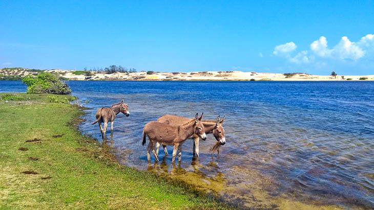 Donkeys in the Donkey Kite Lagoon